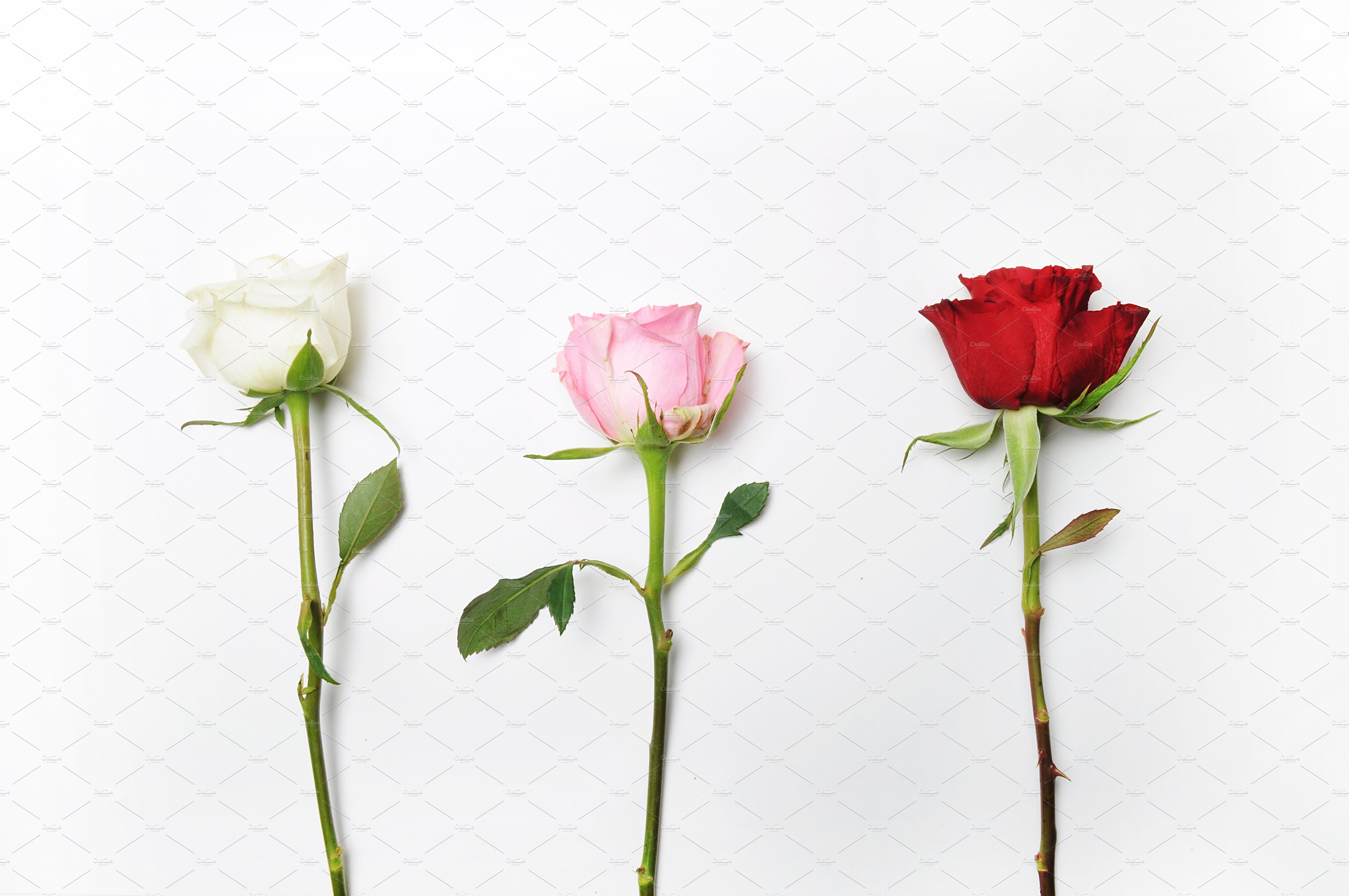 Floral Mockup Pack example image 15