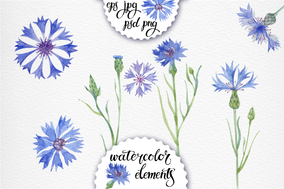 Cornflowers. Watercolor set. example image 2
