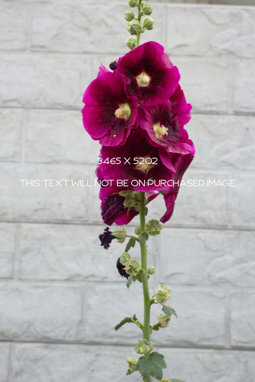 Botanical Photo Bundle, Large Nature Photos example image 9