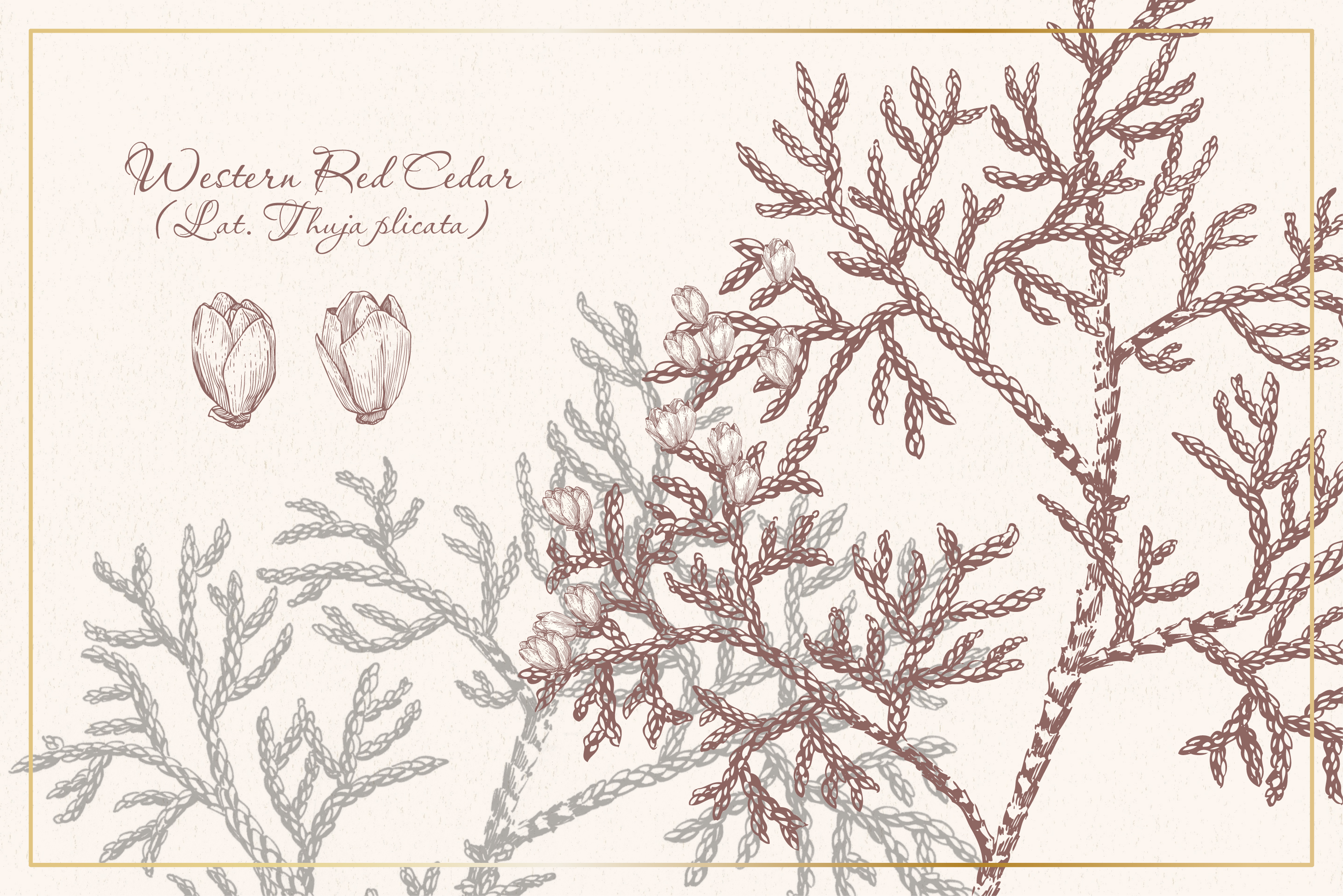 Botanical sketchbook. Vol.1 example image 8