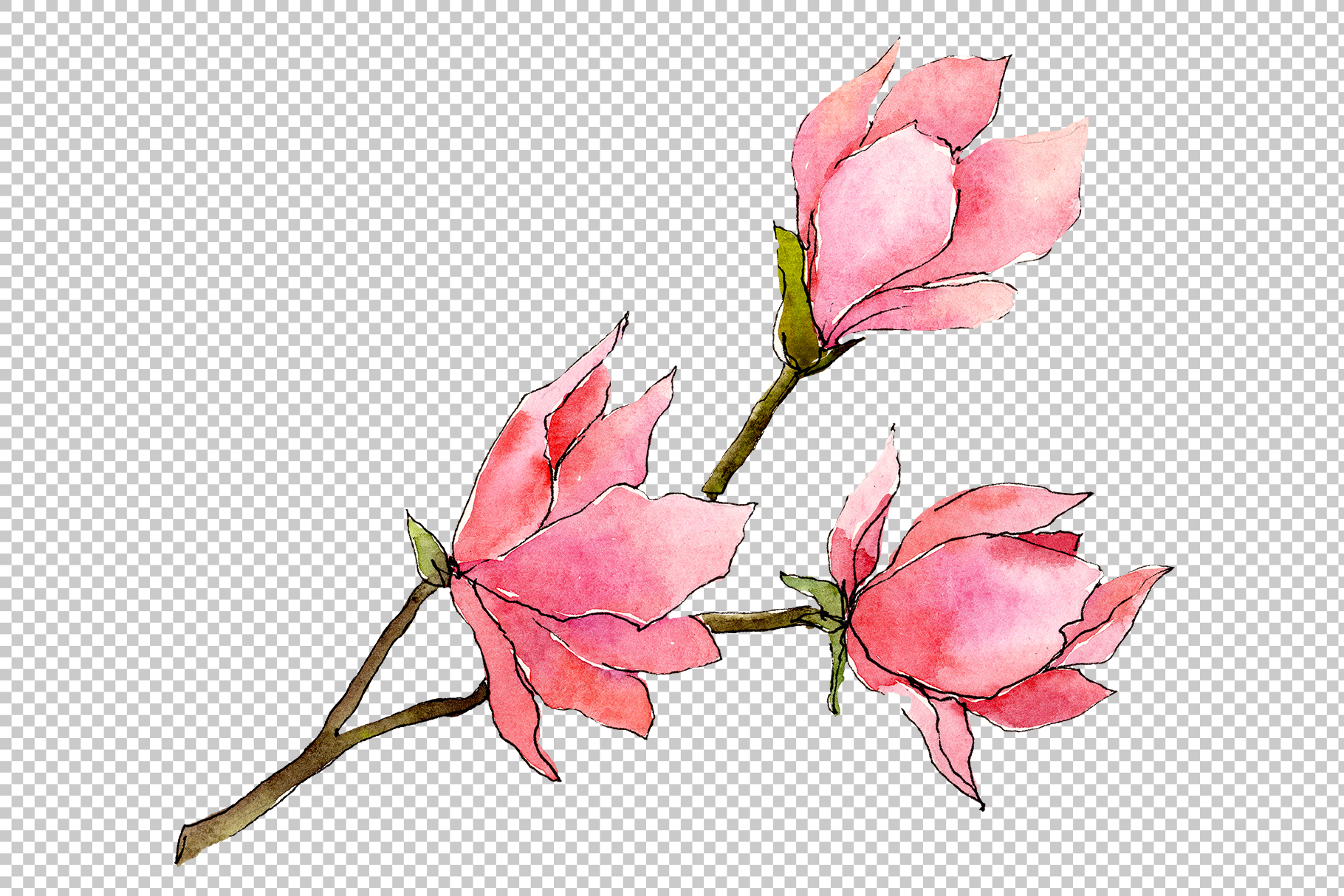 Tender pink magnolia PNG watercolor set example image 3