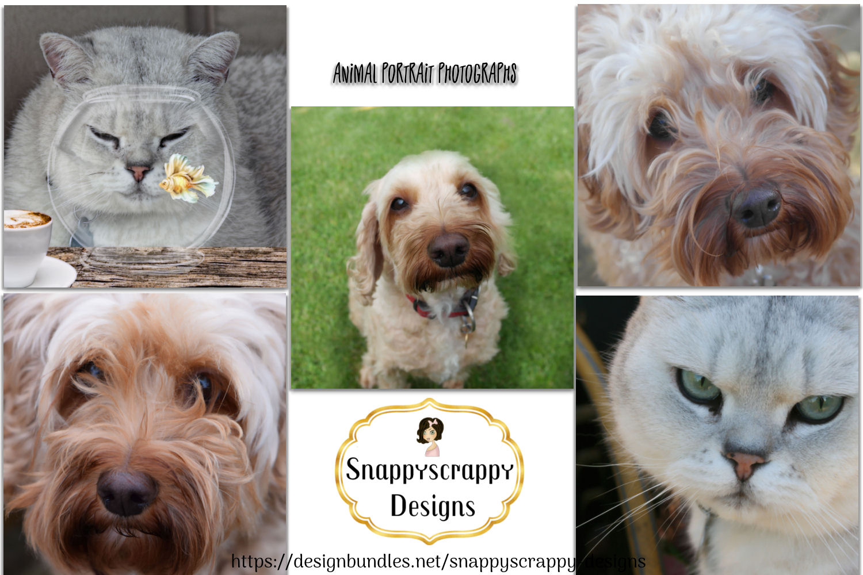 Animal Portrait Photographs example image 1