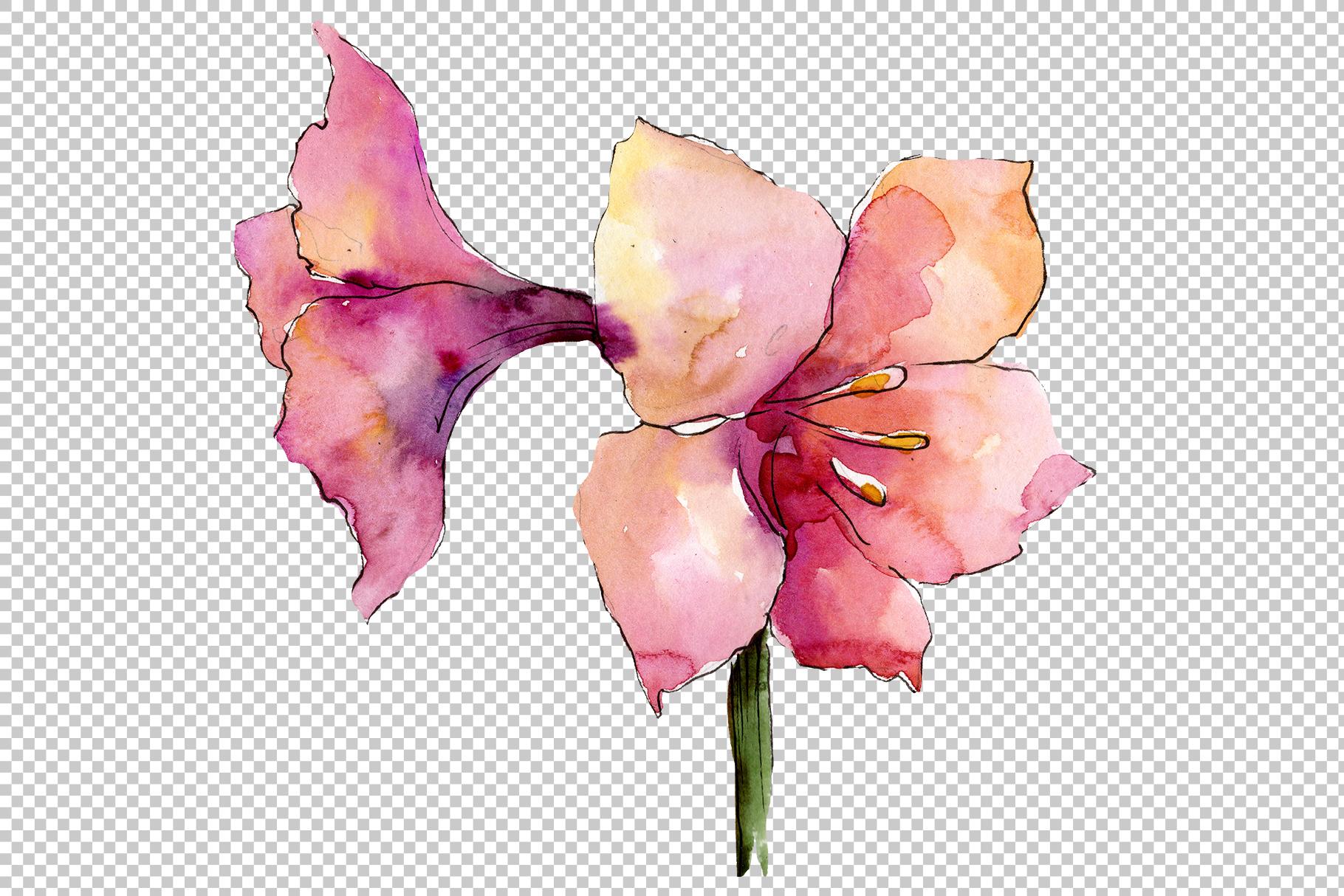Beautiful watercolor amaryllis PNG set example image 4