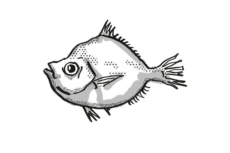Malayan Deepsea Boarfish Australian Fish Cartoon Retro Drawi example image 1
