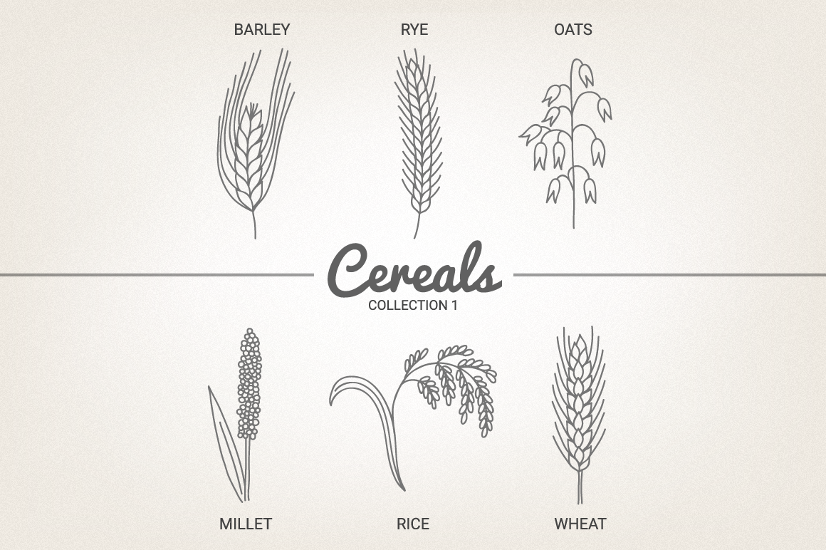 12 Cereals - Illustration & Patterns example image 4