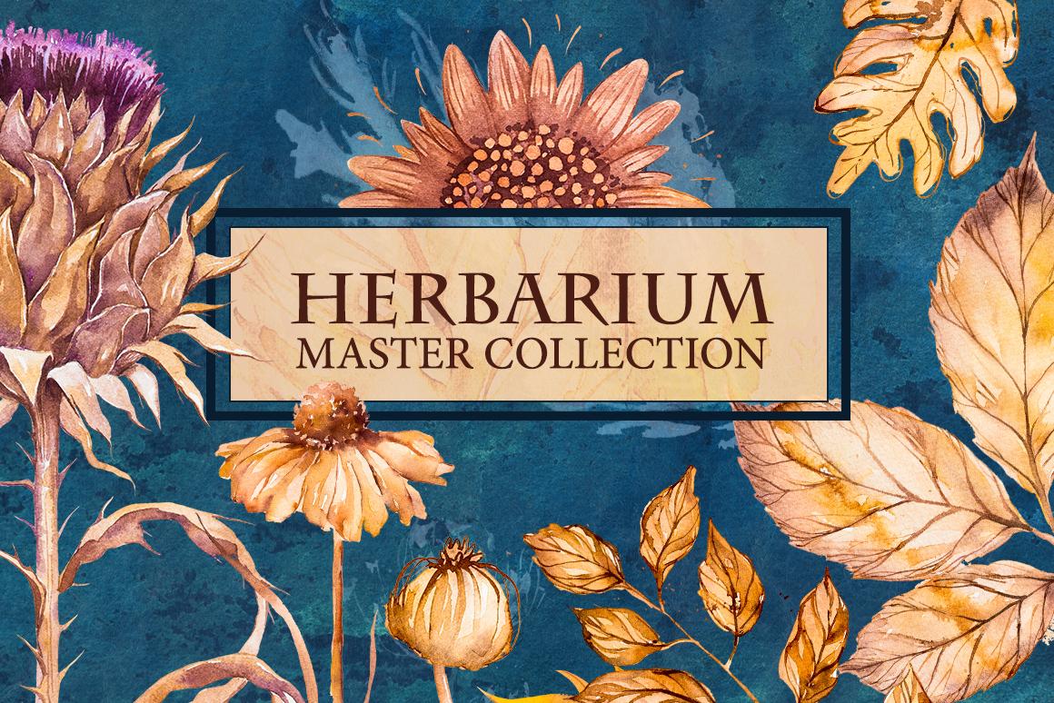 Herbarium Master Collection example image 1