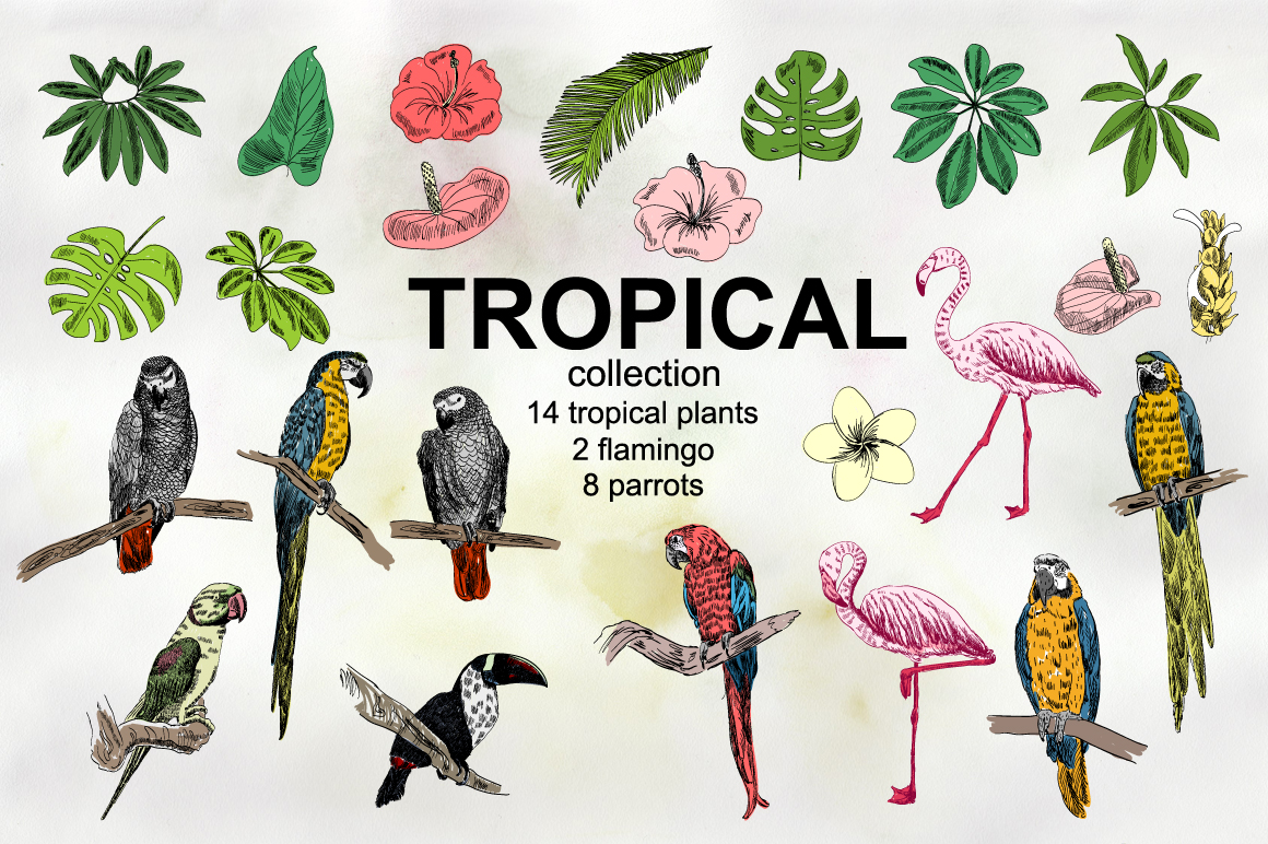 Tropical collection. example image 3