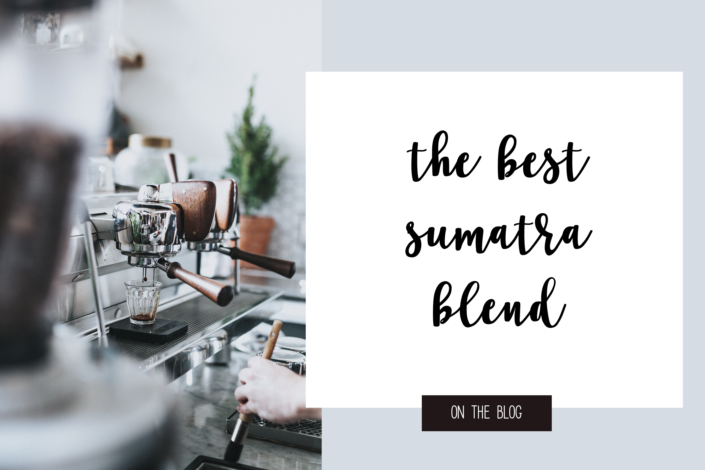 Coffee Shop Script a cursive brush font with lots of extras example image 12