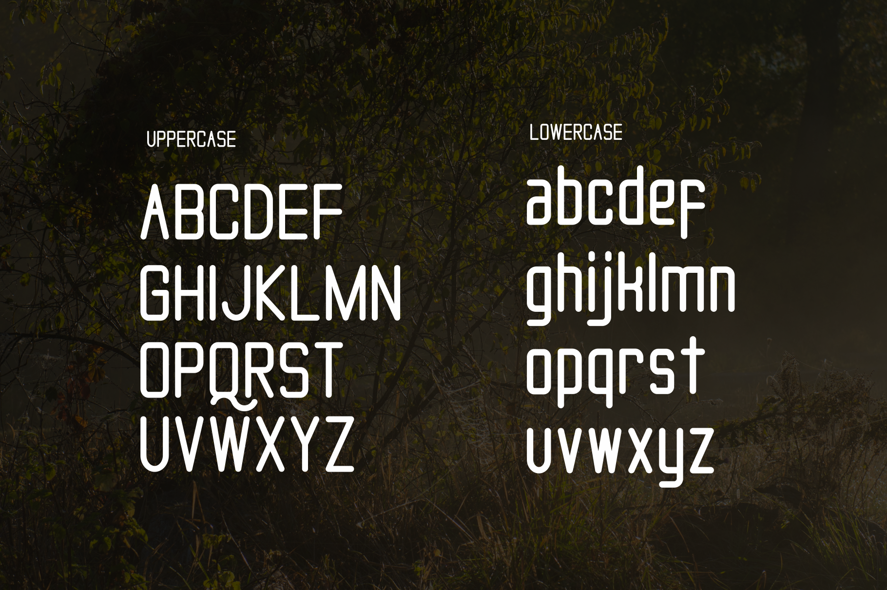 Tallo Font  example image 3
