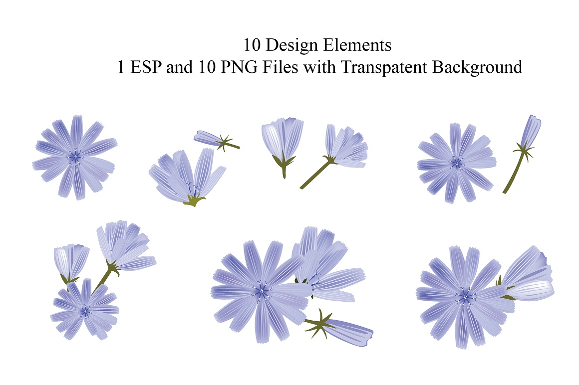Chicory Vector Set example image 2