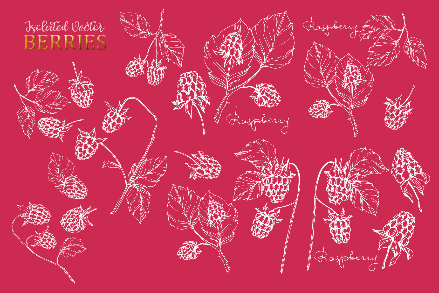 Raspberry Vector Collection example image 7