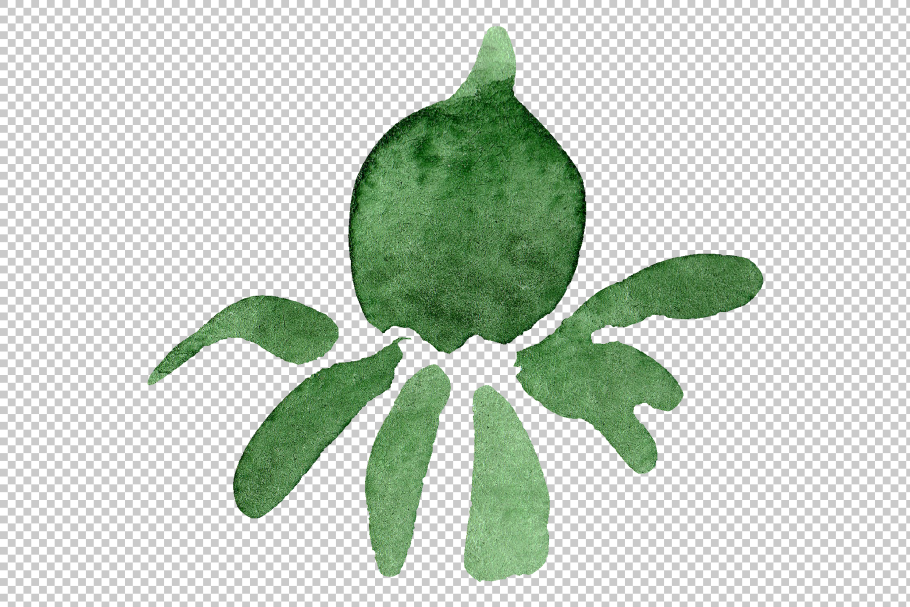Asters Watercolor png example image 11