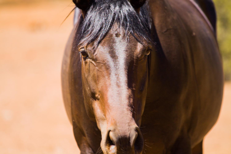 Horse photo 1 example image 1