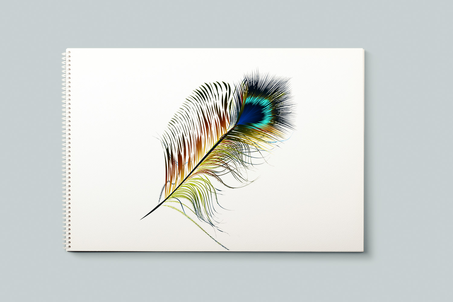 Feathers set. Vector ClipArt example image 4
