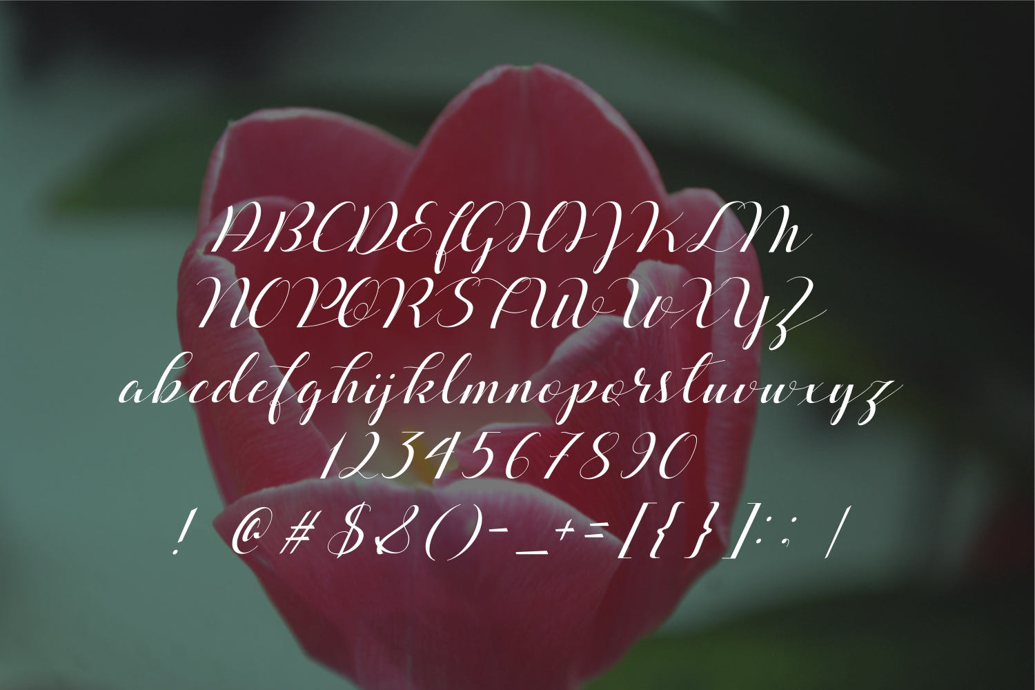 Beloved Typeface example image 2