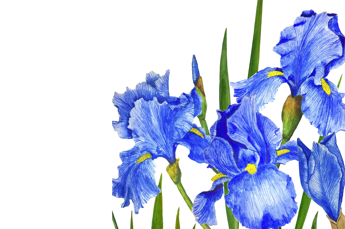 Watercolor flowers irises example image 7