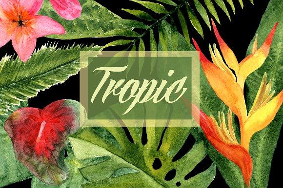 Watercolor Tropic Clip Art example image 1