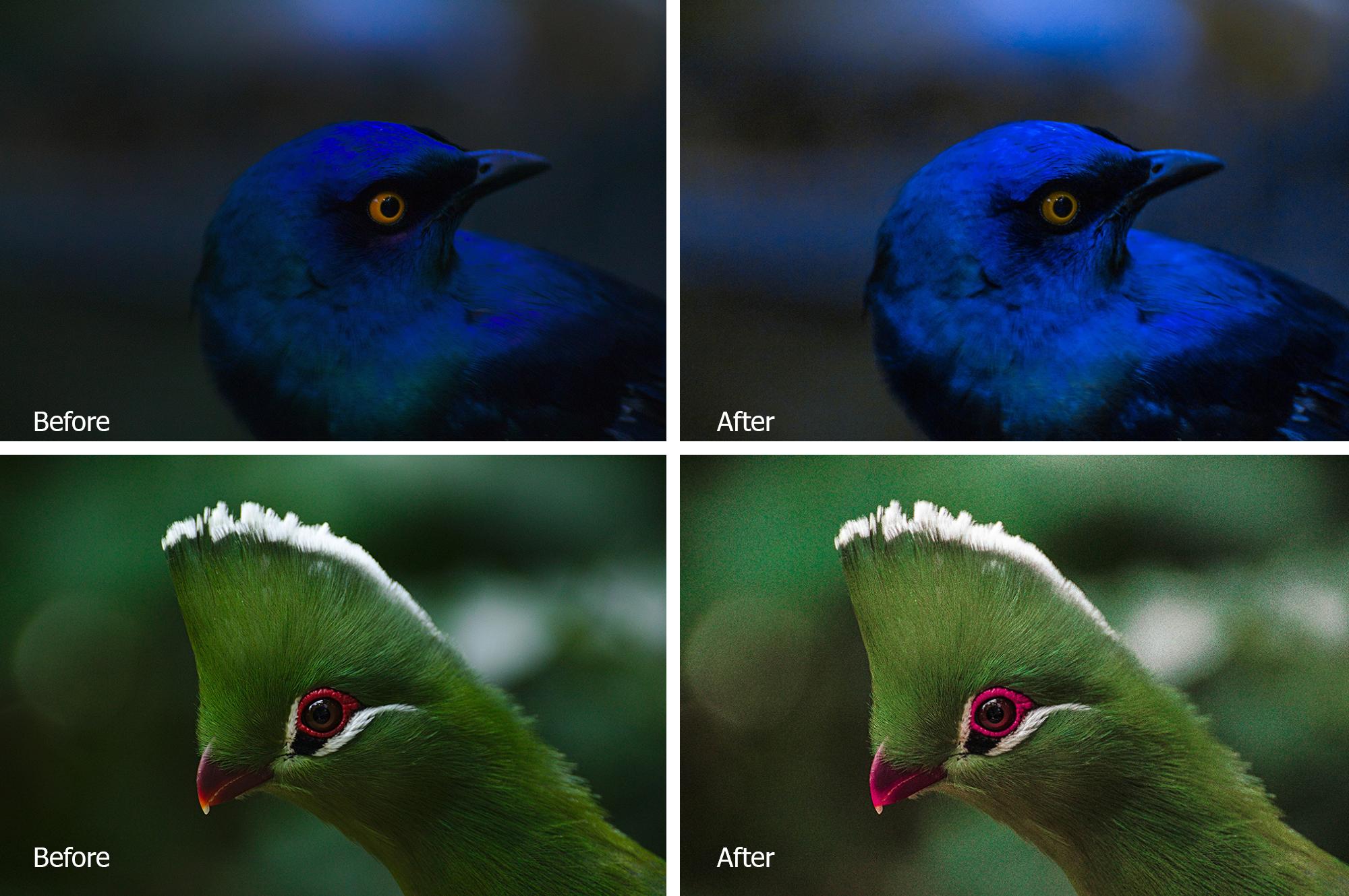 Birds Lr Presets example image 3
