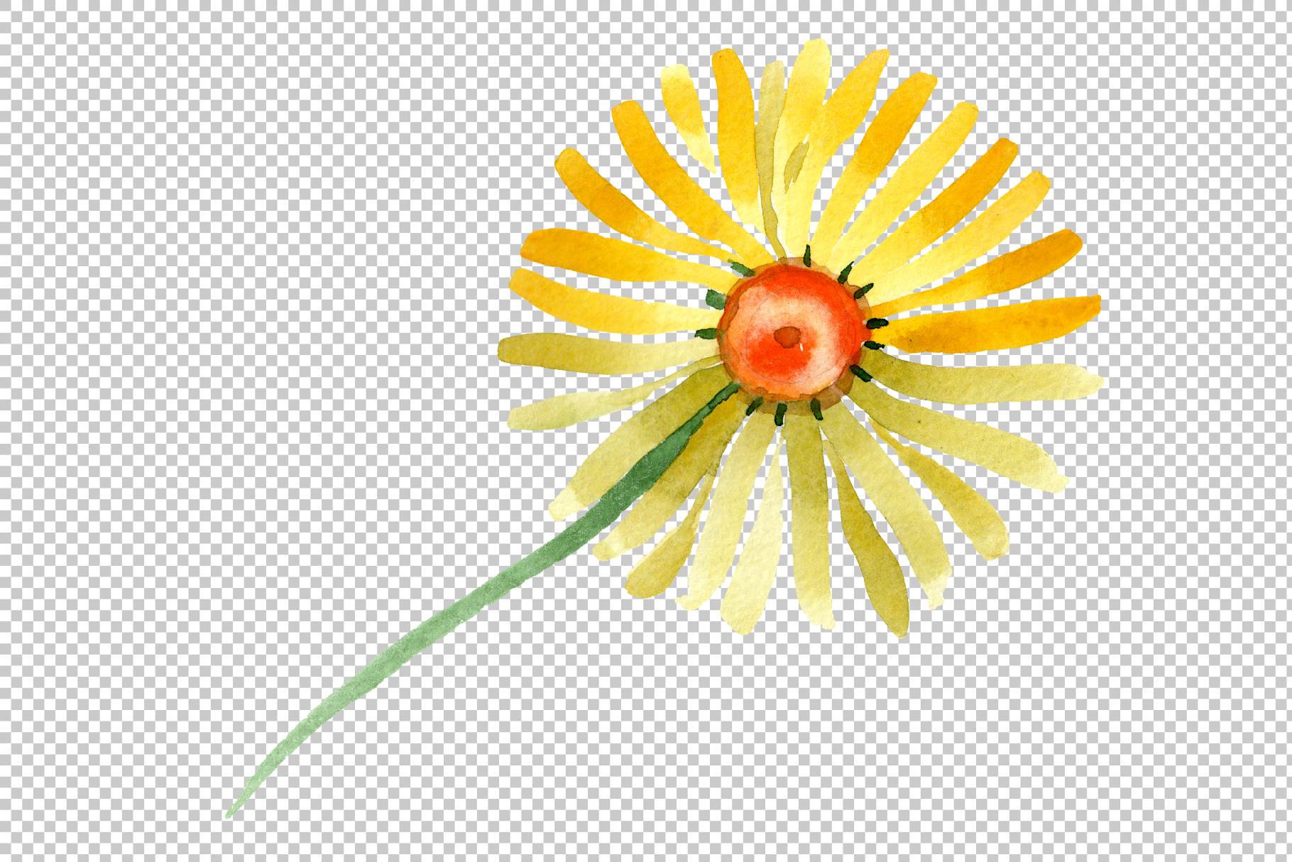 Yellow chamomile Watercolor png example image 4