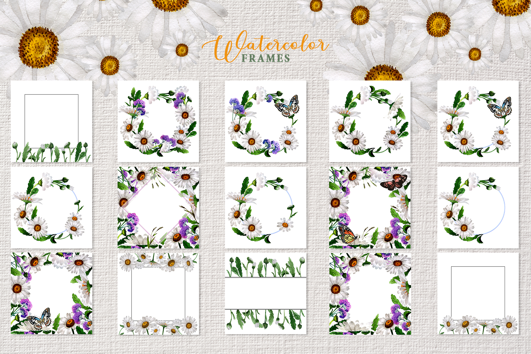 Chamomile white Watercolor png example image 4