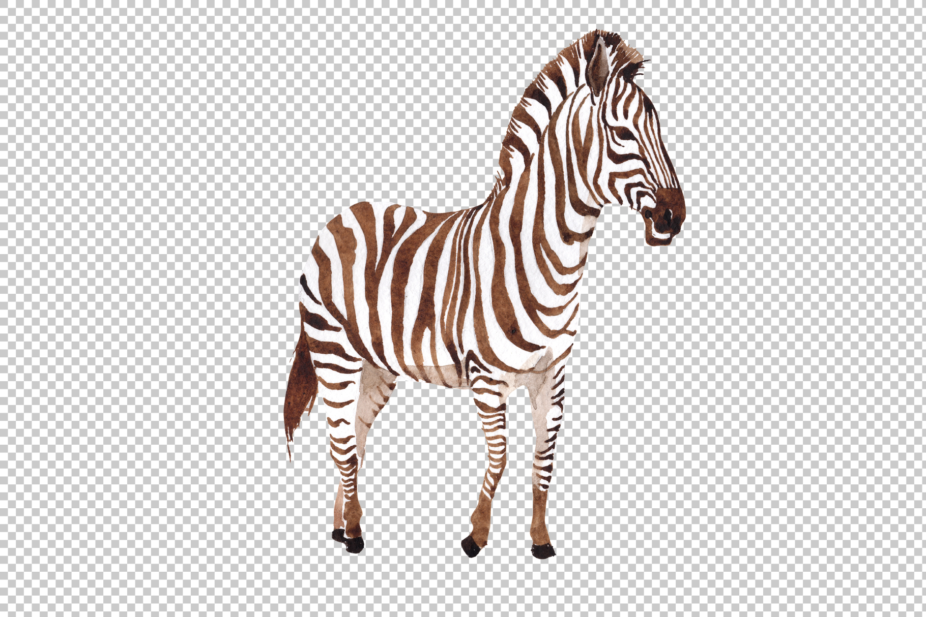 Zebra set Watercolor png example image 3