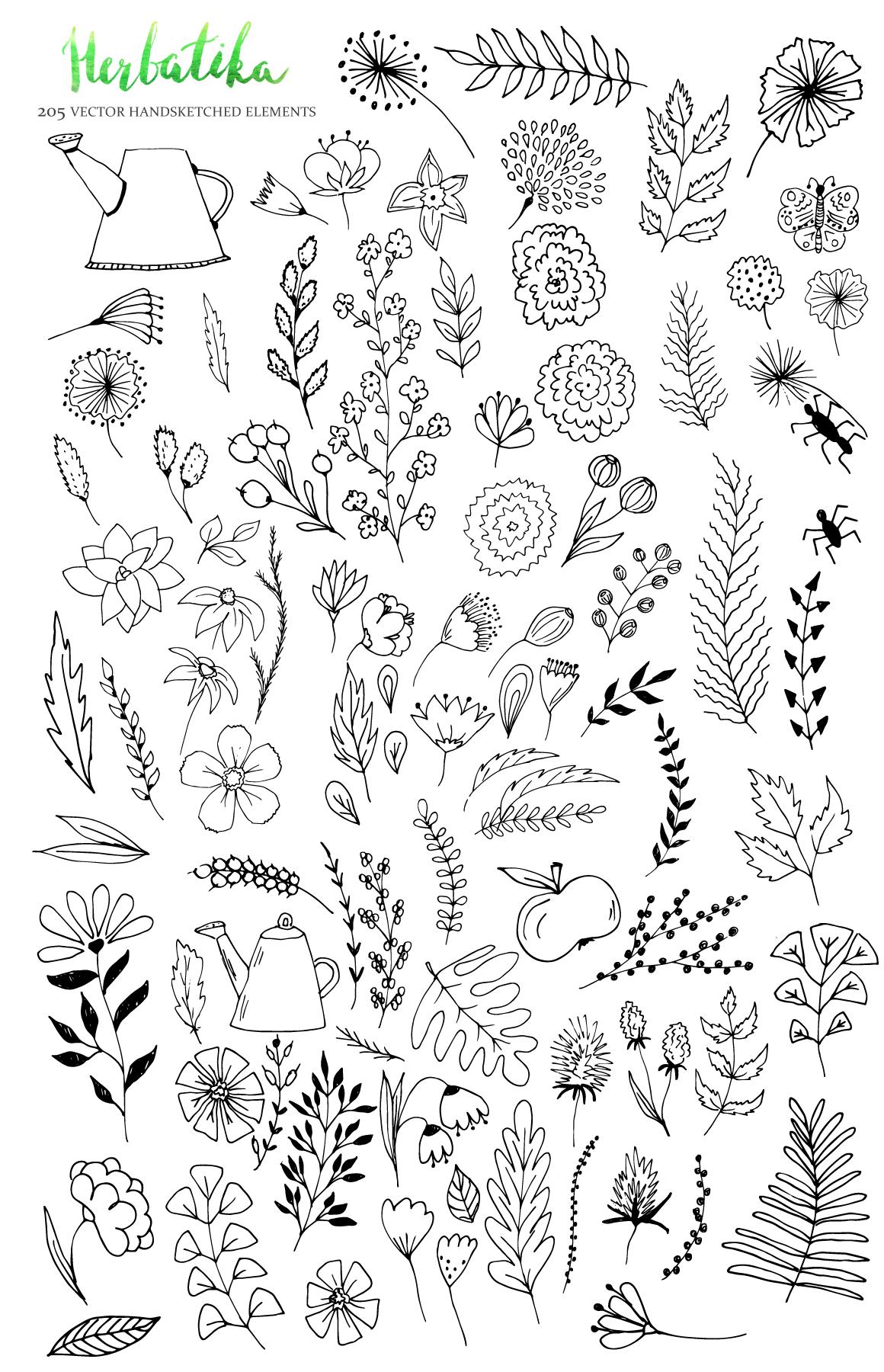 Herbatika Vector Sketched Set example image 3