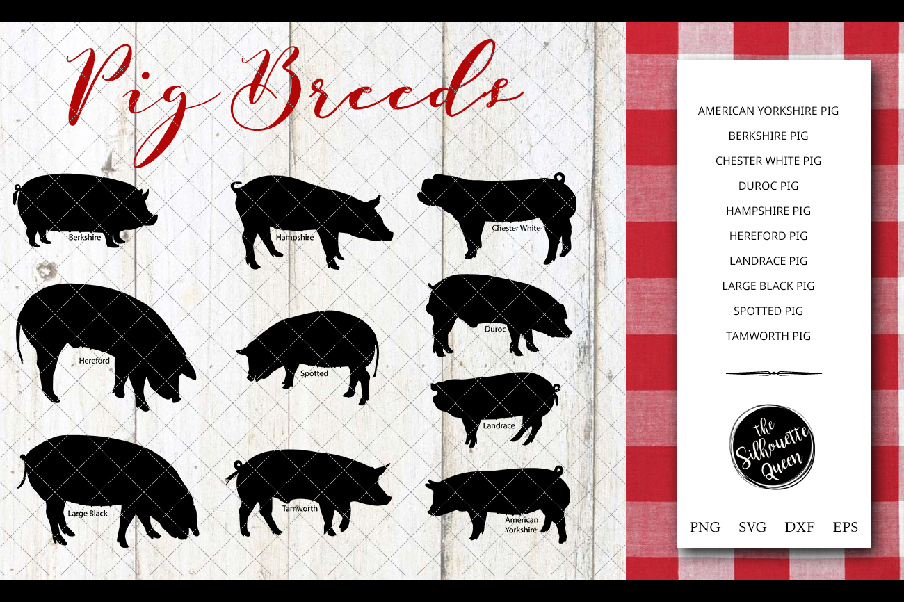 Pig Breeds Silhouette Vector svg file, pig svg cut file example image 1