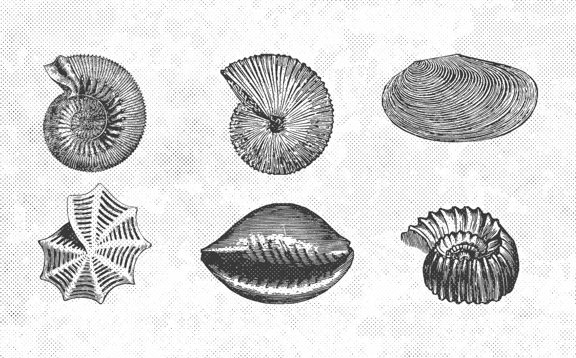 Paleontology Vintage Vector Illustrations 150 Items example image 5