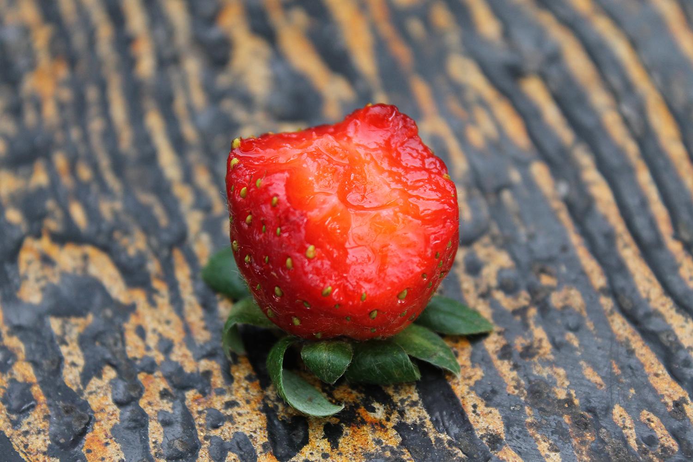 Strawberry example image 5