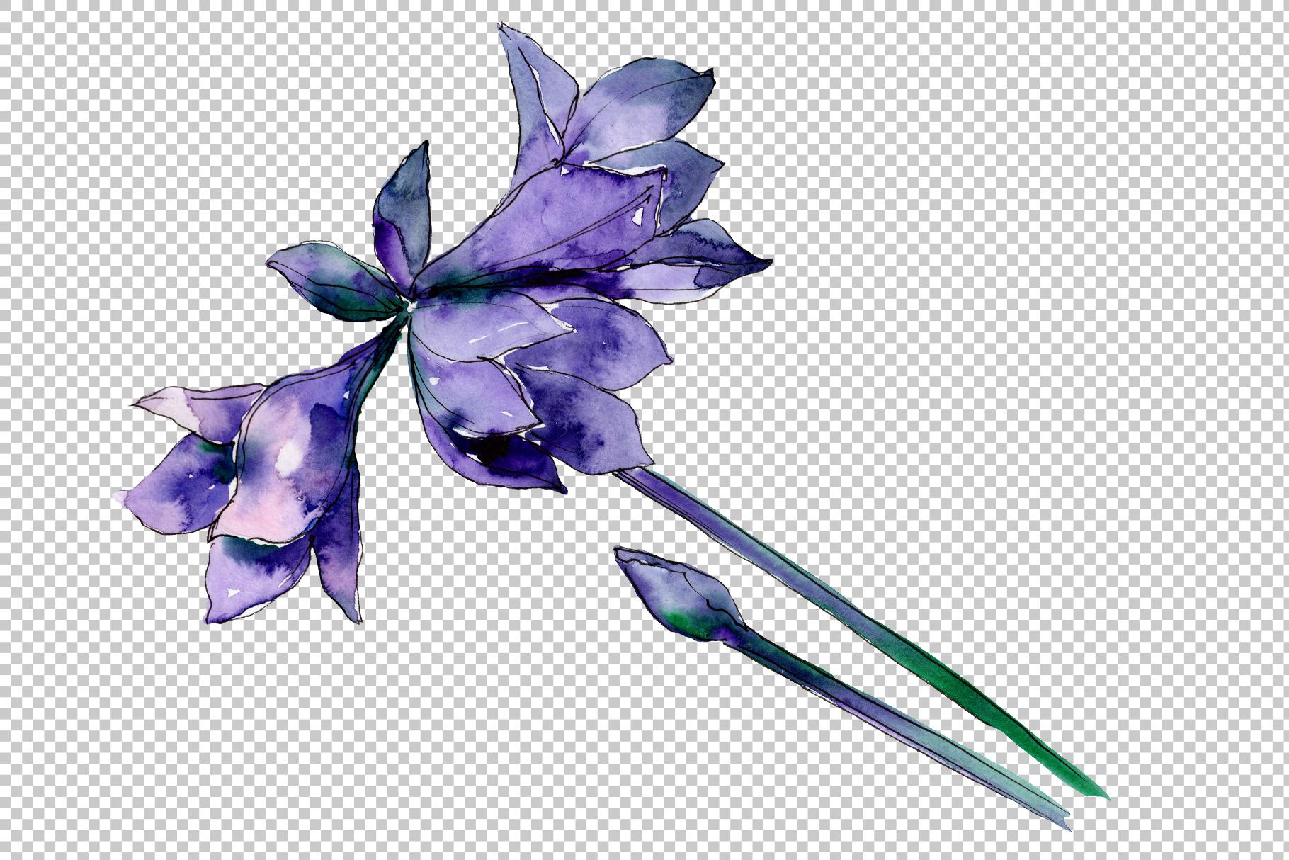 Beautiful watercolor amaryllis PNG set example image 3