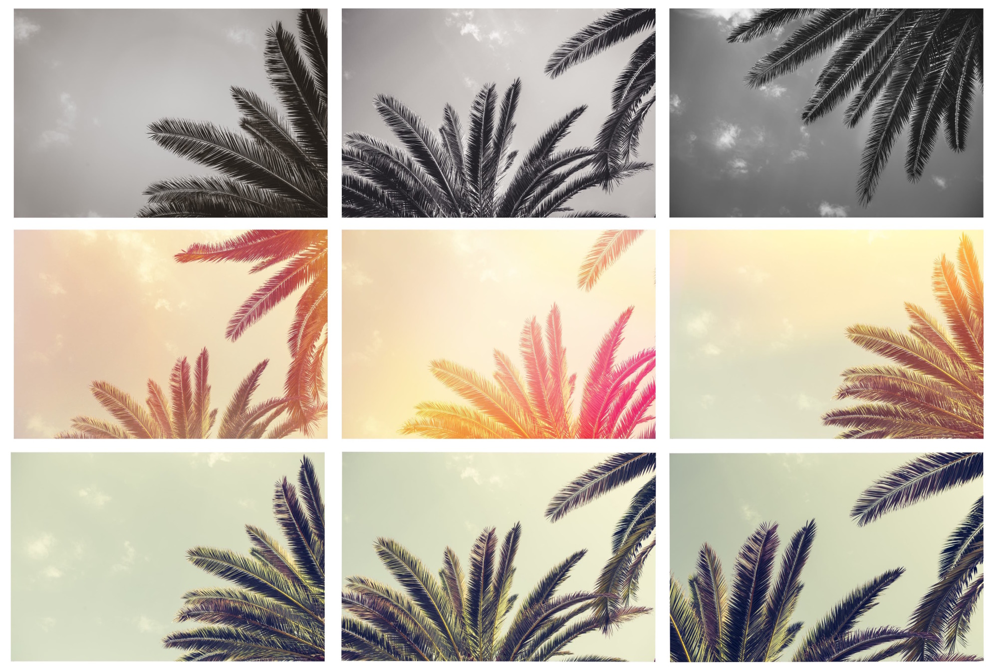 The PALM TREE Pack example image 2