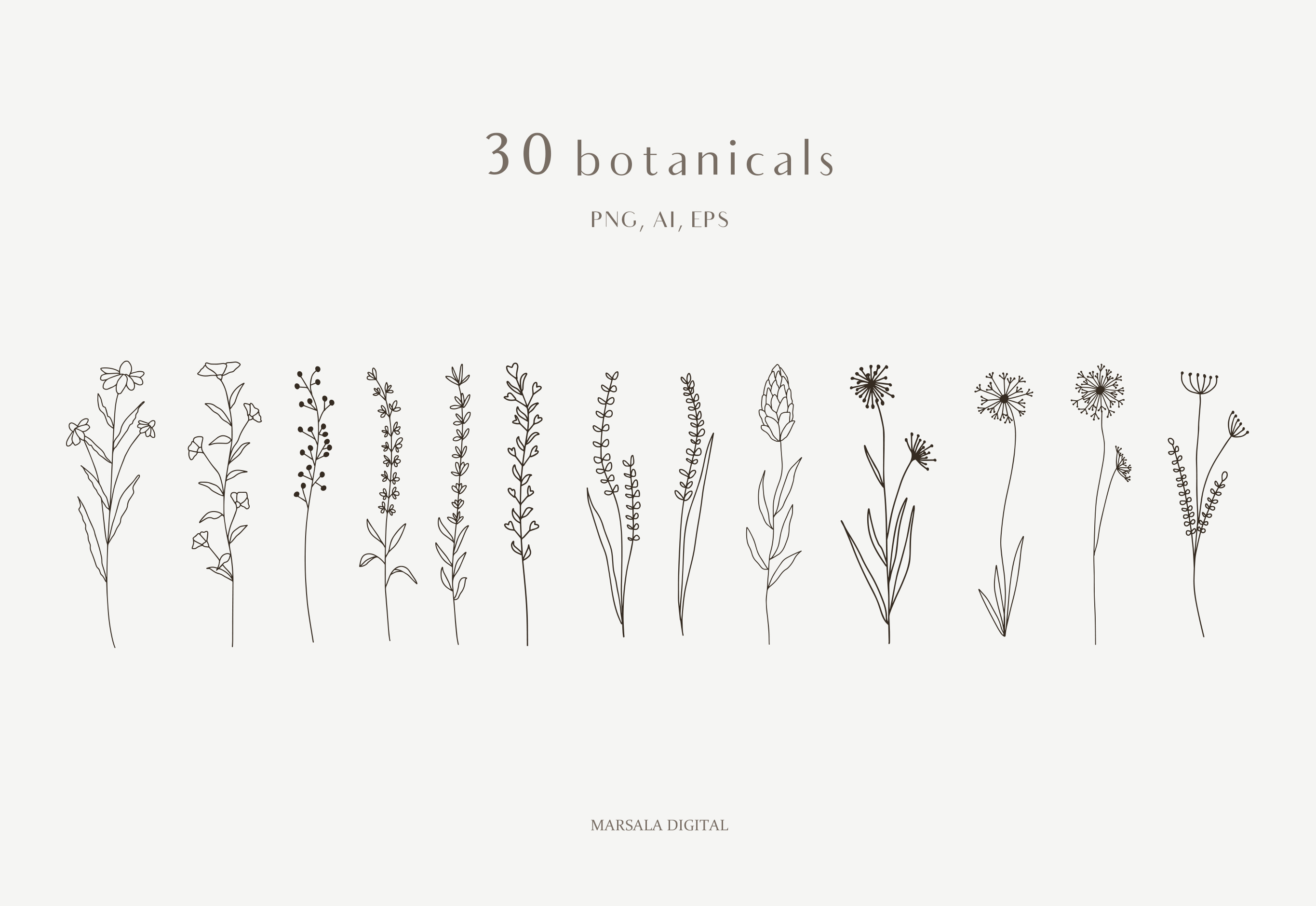 Botanical Line Art, Wildflowers Clipart, Leaves Clipart example image 3
