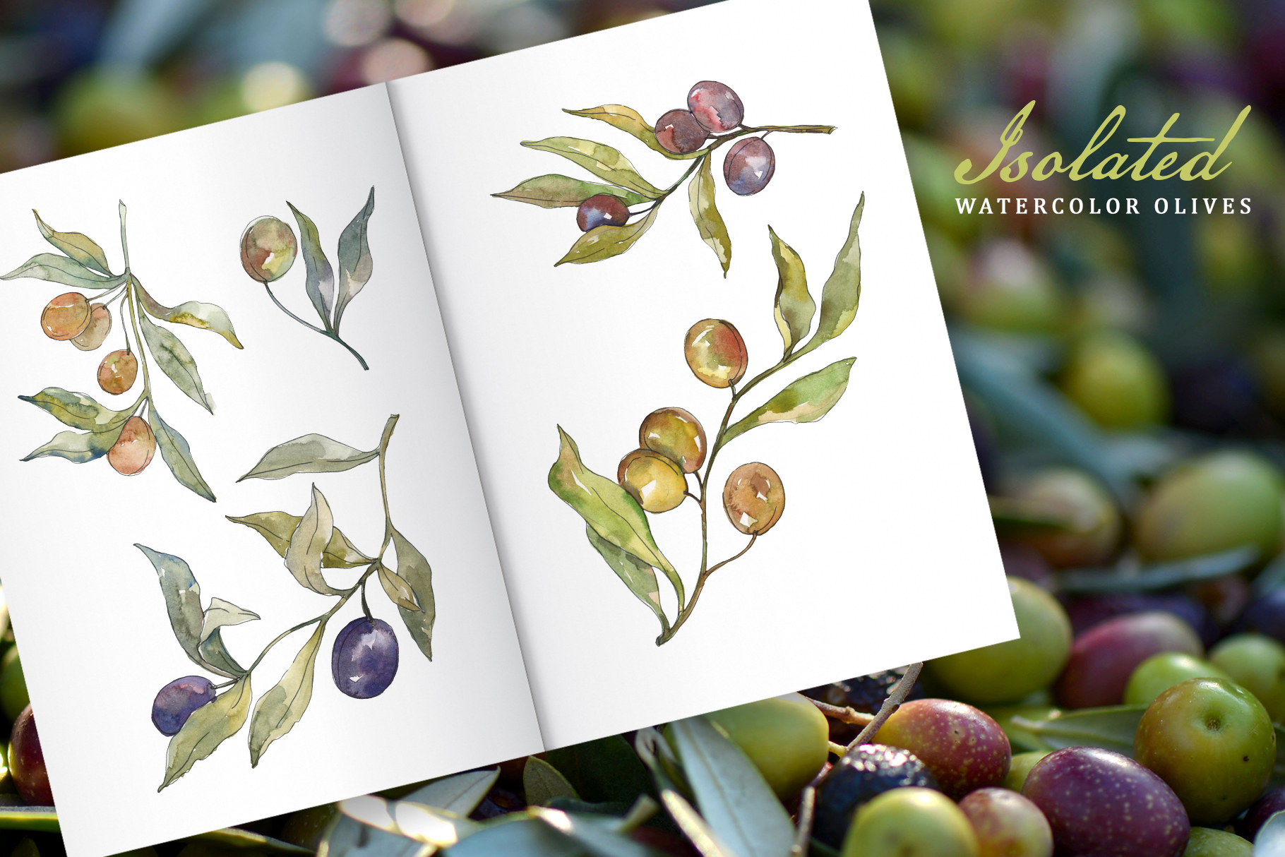 Tasty olives watercolor png example image 7