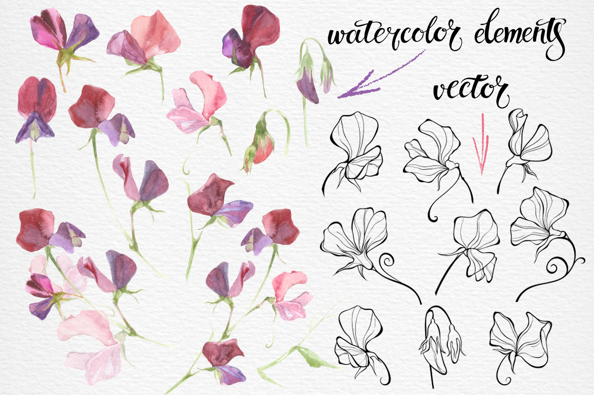 Sweet peas. example image 2