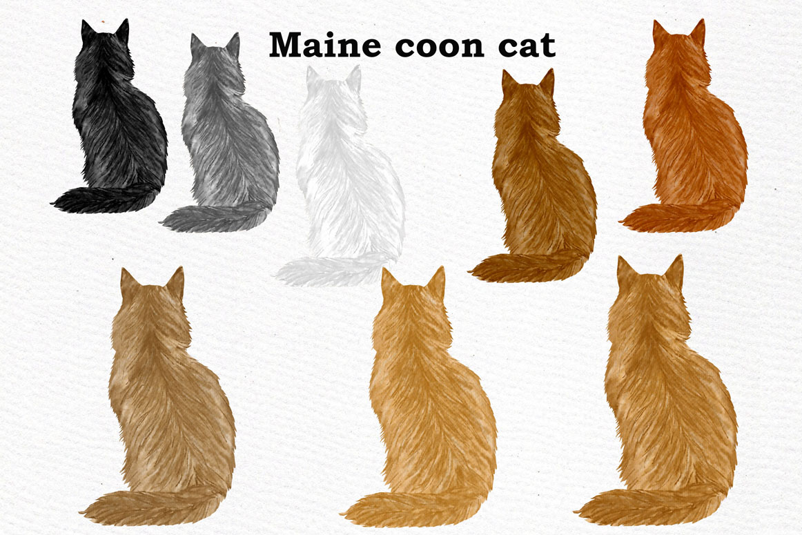 Cat Clipart, WATERCOLOR CATS, Cat breeds,Pet clipart, kitten example image 8