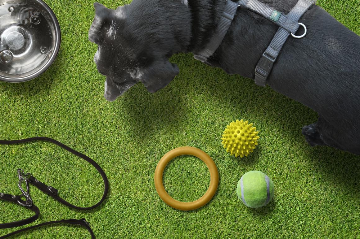 Pet Scene Generator  example image 5