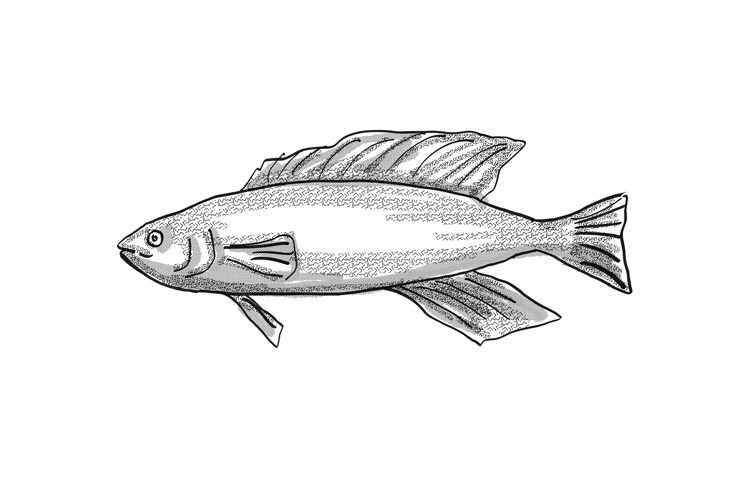 Butterfish New Zealand Fish Cartoon Retro Drawing example image 1