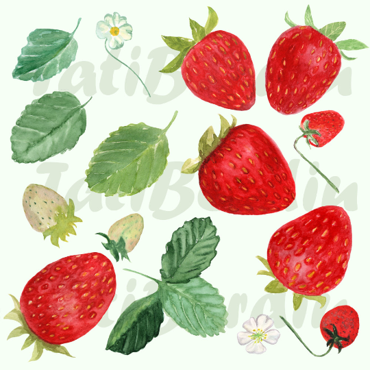 15 Watercolor Strawberries Clip Art example image 2