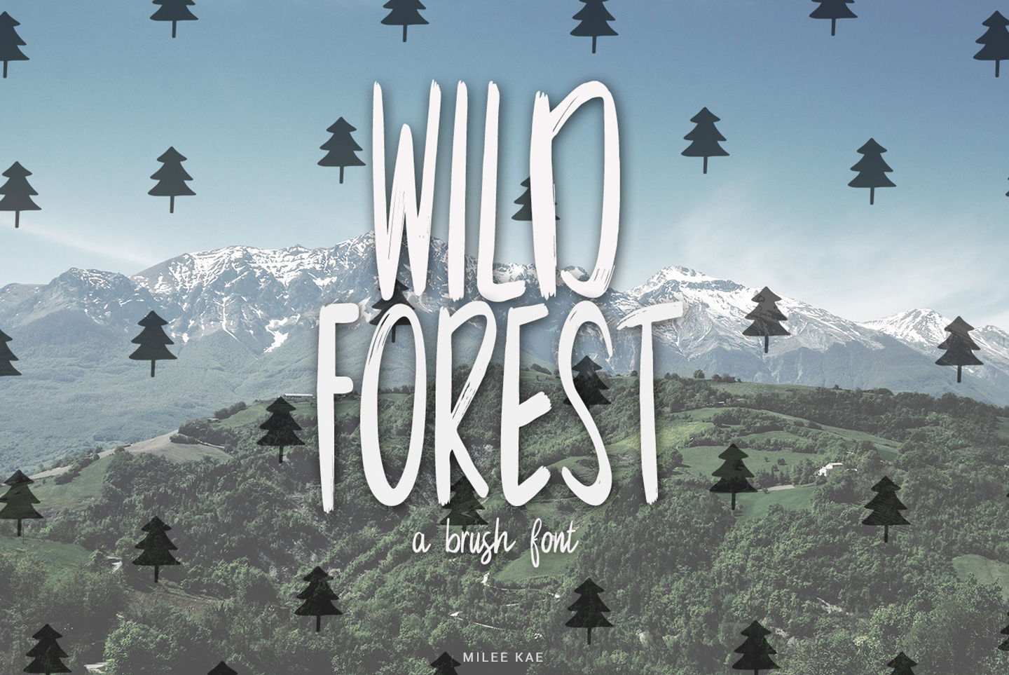 Wild Forest a modern brush font example image 1
