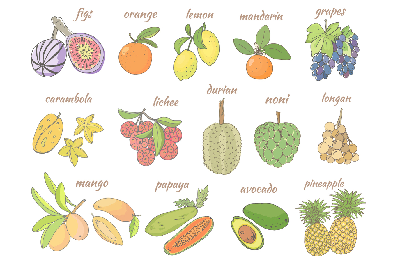 Sketch of tropical fruits. example image 2