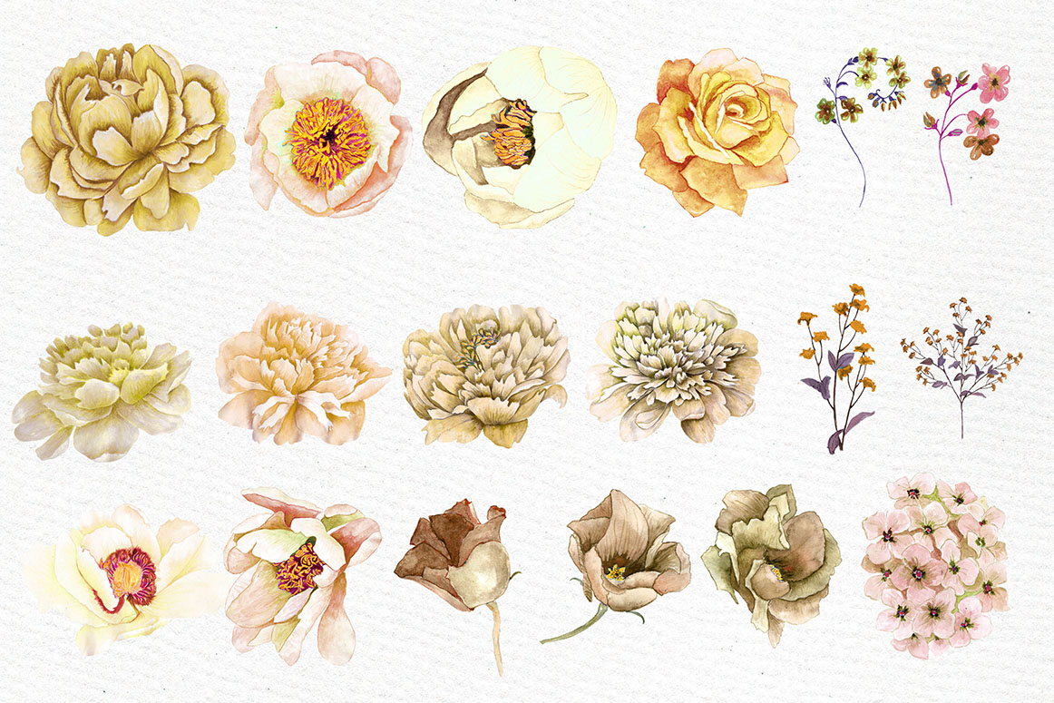 Watercolor Sepia flowers Clipart example image 3