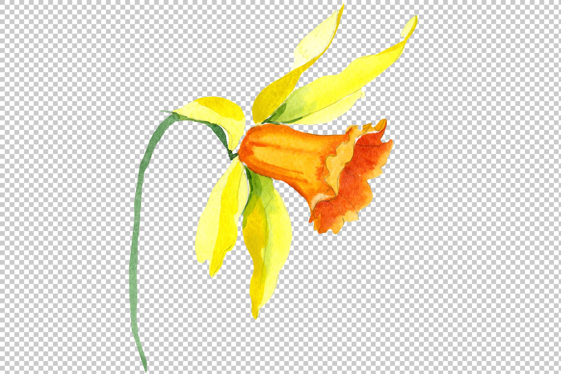 Narcissus lemon flower PNG watercolor set example image 5