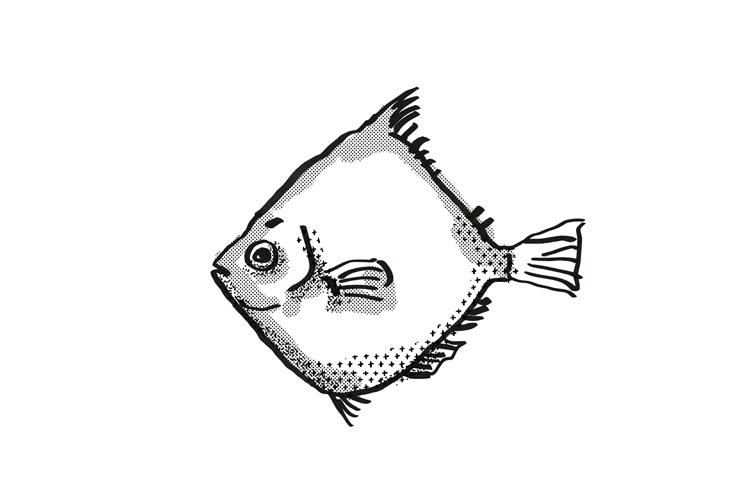 Rosy Deepsea Boarfish Australian Fish Cartoon Retro Drawing example image 1