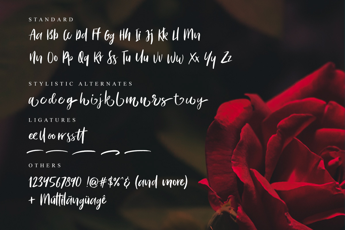 Bitter Rose - Brush Font (+TEXTURES) example image 9