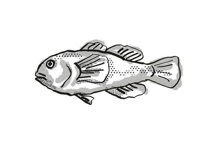 Plain Coralgoby Australian Fish Cartoon Retro Drawing example image 1