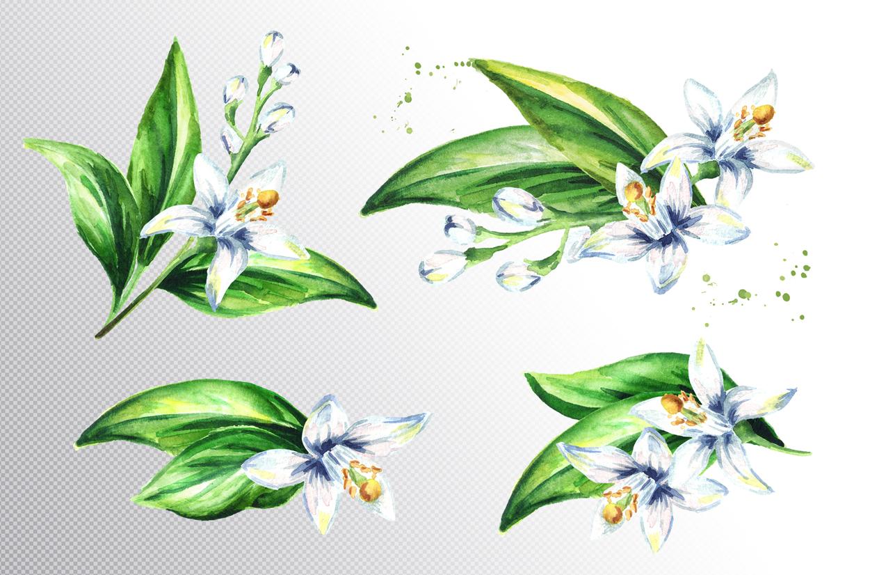 Neroli. Watercolor collection example image 3