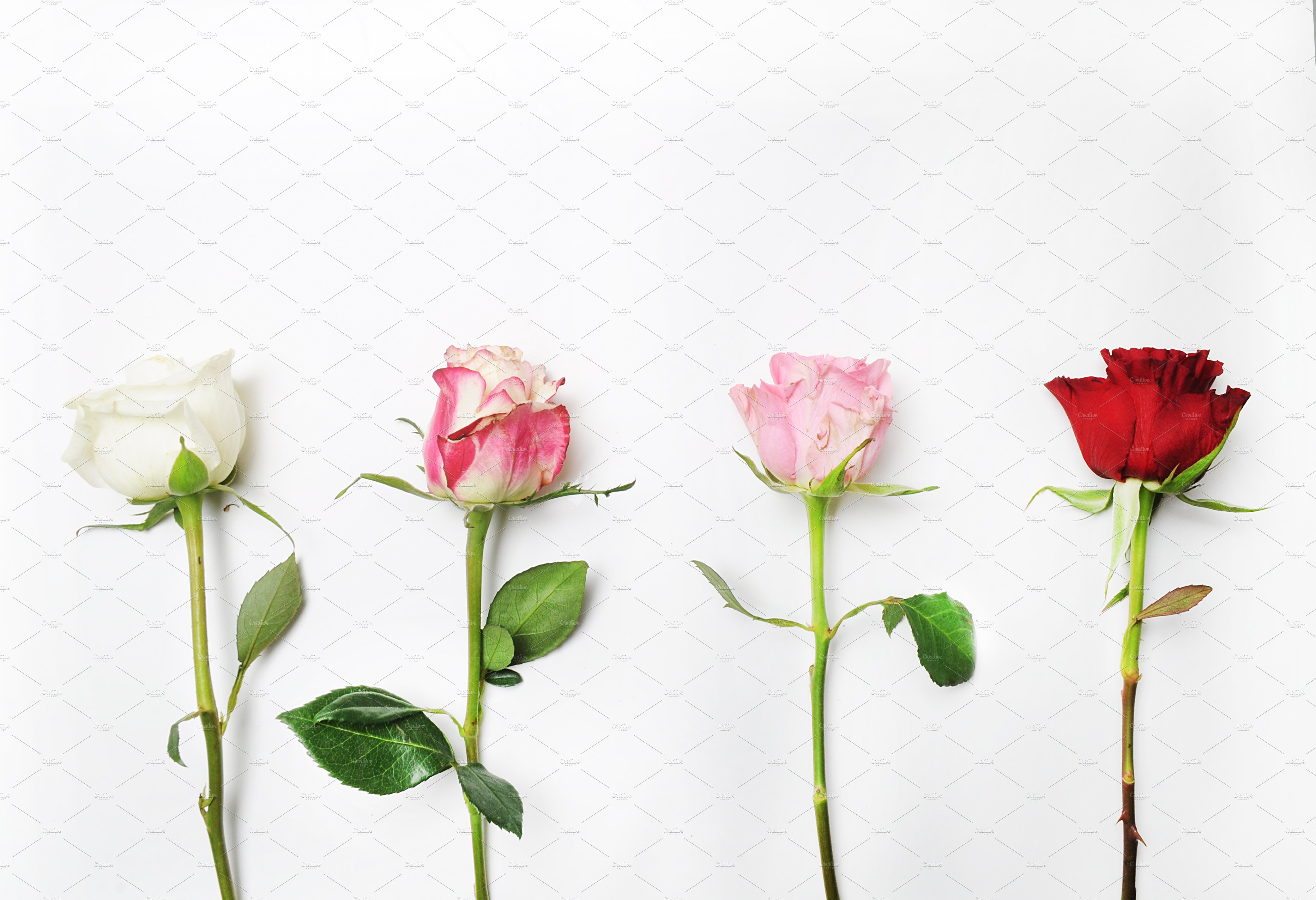 Floral Mockup Pack example image 16