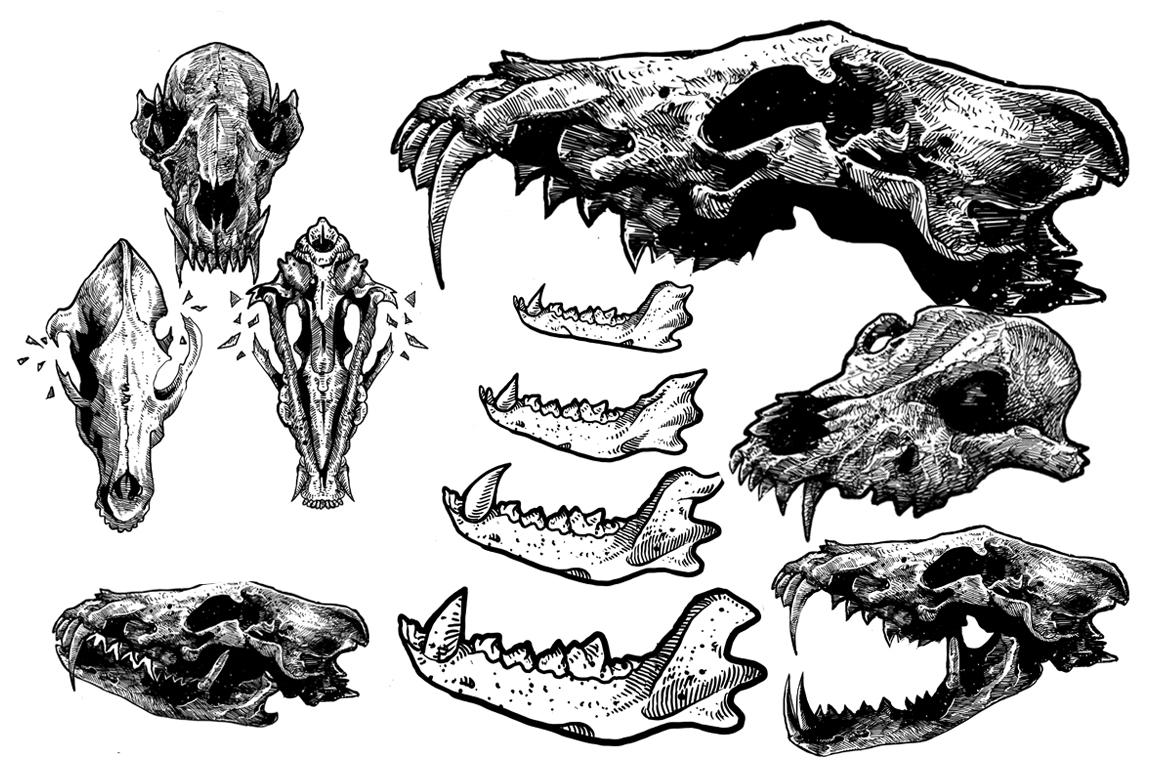 Wolf head skull example image 1