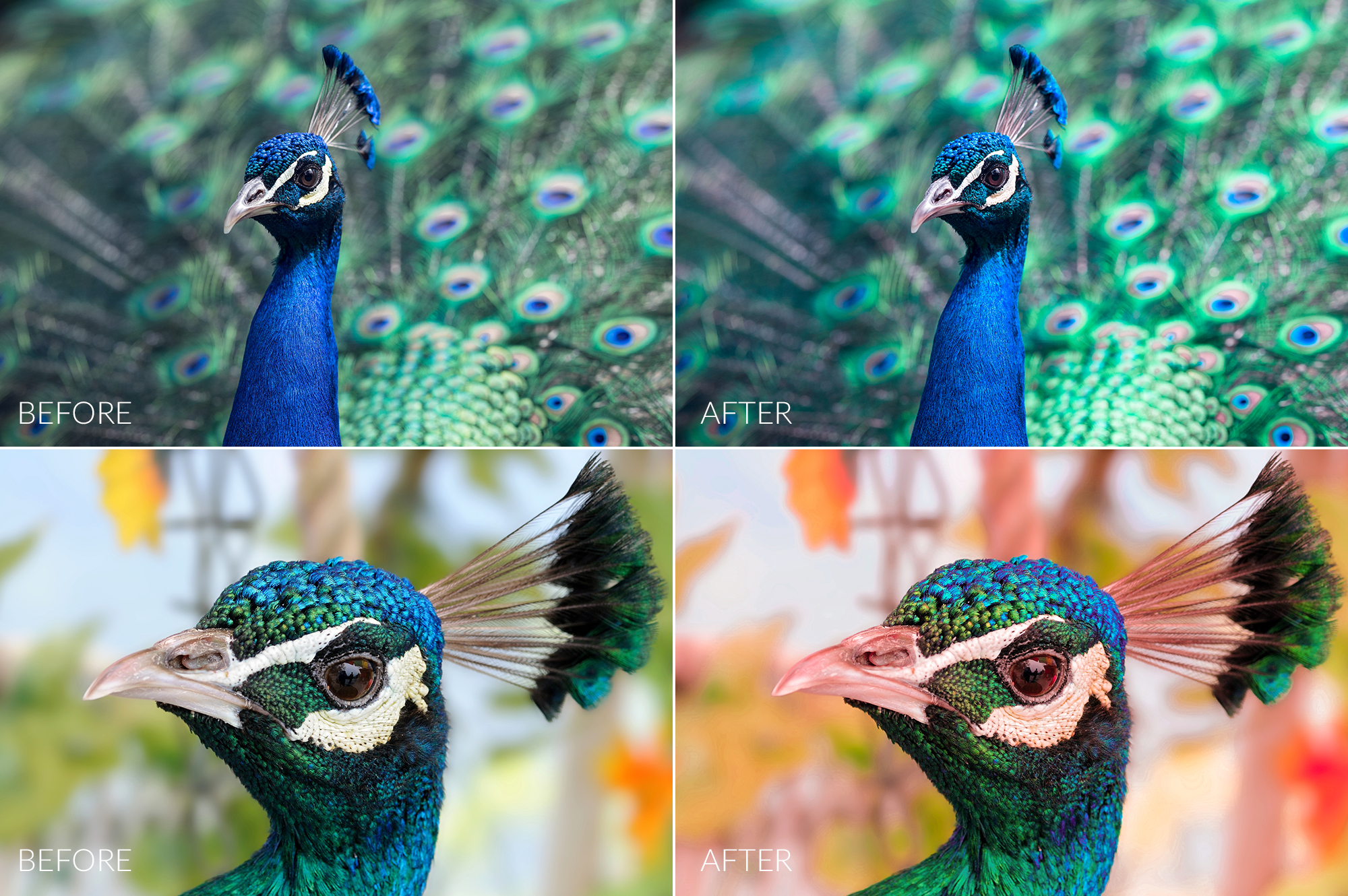 Peacock Lr Presets example image 2