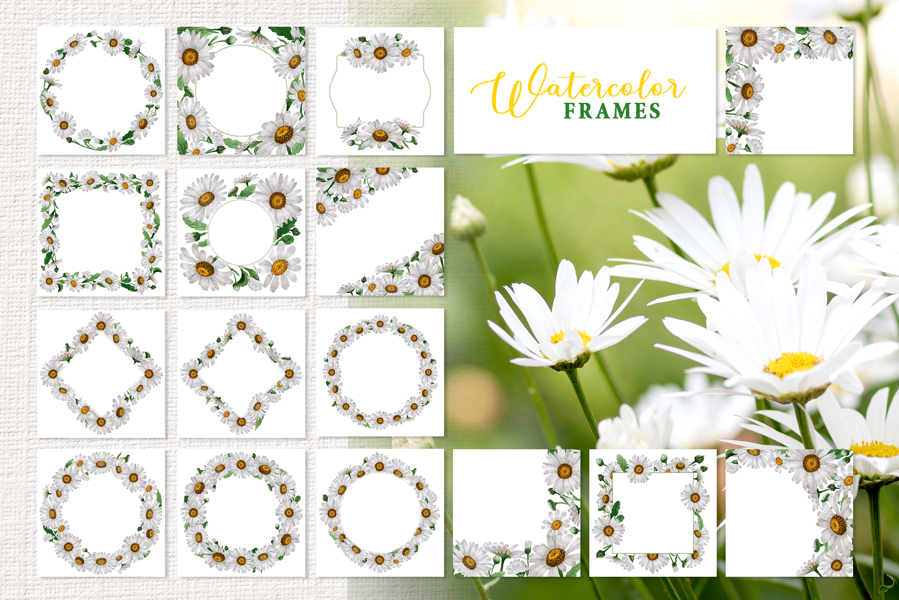 Chamomile white Watercolor png example image 3